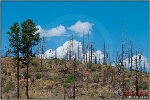 Hayman Fire Burn Area: Ten Years Later