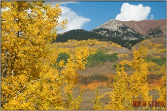 Fall Colors Near Crested Butte, Colorado