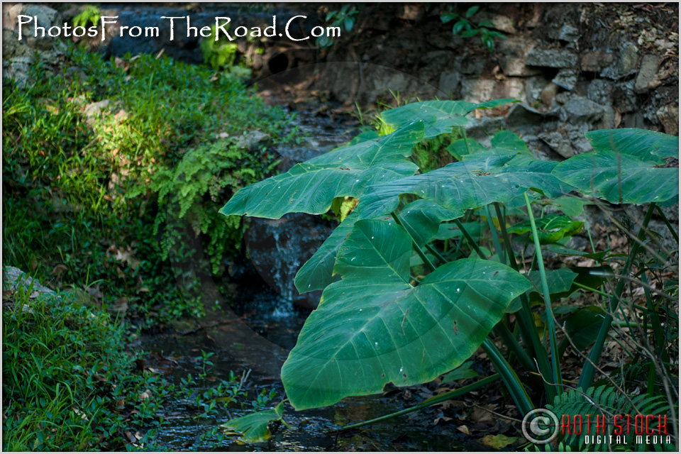 Fern Dell in Los Angeles' Griffith Park