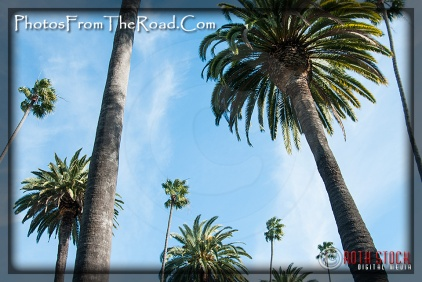 Palm-Lined Beverly Drive